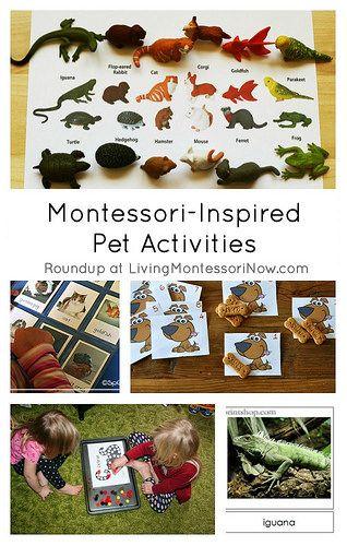 Montessori Inspired Pet Activities Montessori Activities Montessori Montessori Toddler