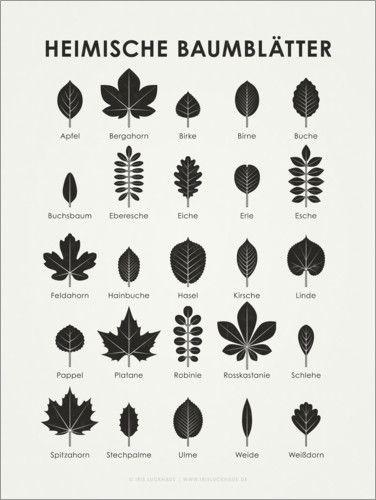 Iris Luckhaus – Heimische Baumblätter