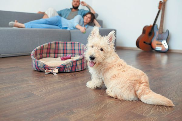 6 Household Cleaning Products That Are Not Safe For Dogs Dog Cleaning Pet Friendly Flooring Dog Friendly Flooring