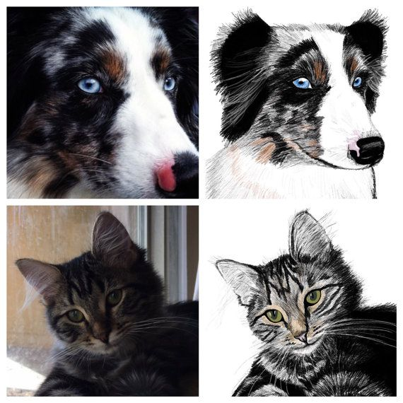 Custom Pet Portrait Drawing detailed your pet/ by TravelingArrow