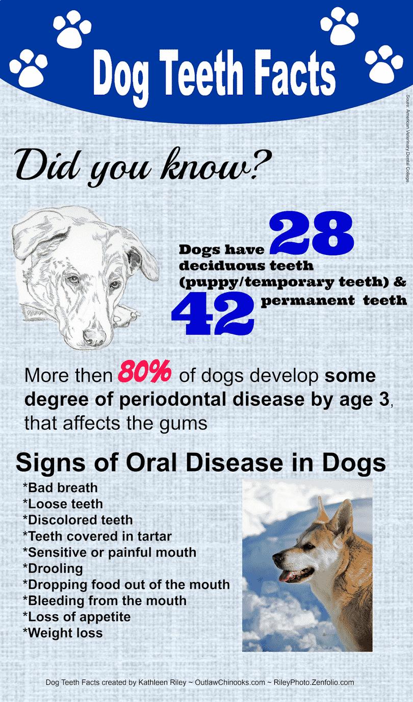 Infographic Dog Teeth Factsdog Grooming Dogs Grooming Pets Dogcleaning Doggroomingtips Tipstokeepthedogclea Dog Teeth Dog Infographic Brushing Dogs Teeth