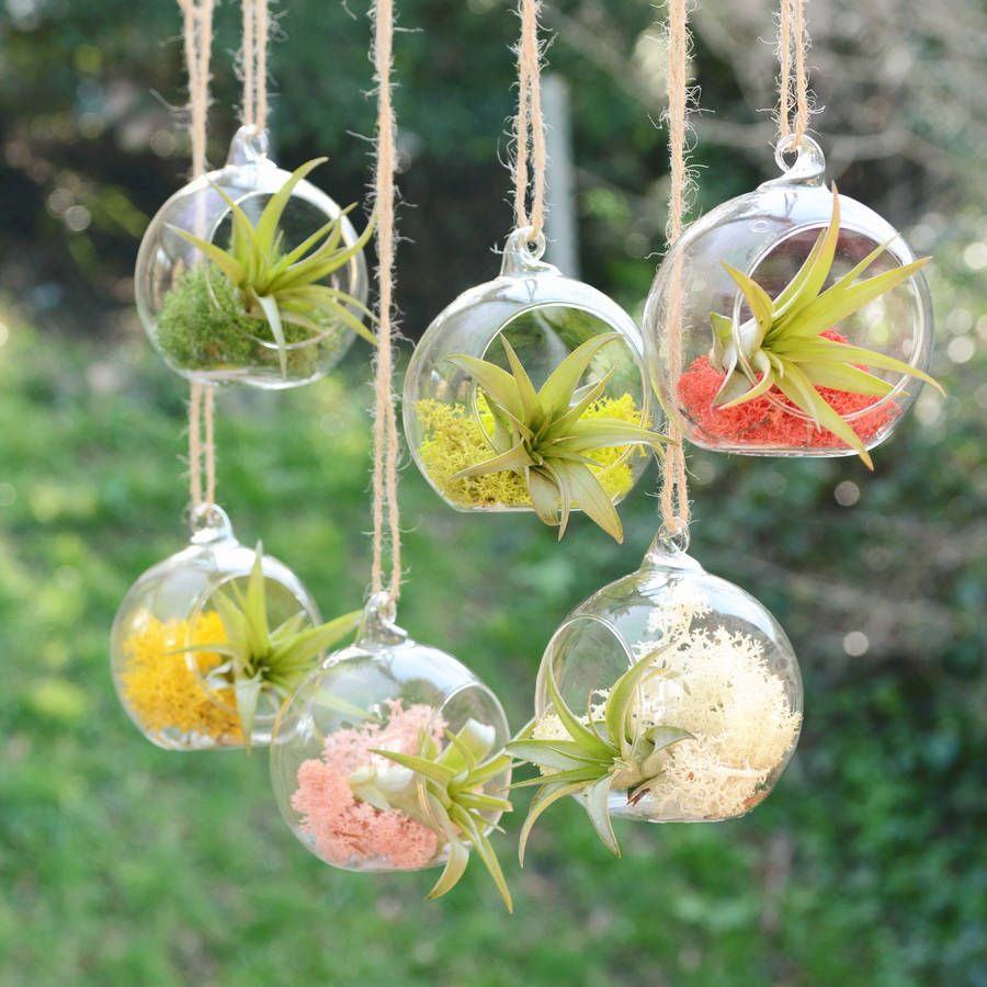 Small hanging glass vase air plant terrarium air plants for Outdoor hanging ornaments