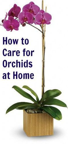 Everything You Need to Know to Grow Orchids Like a Boss