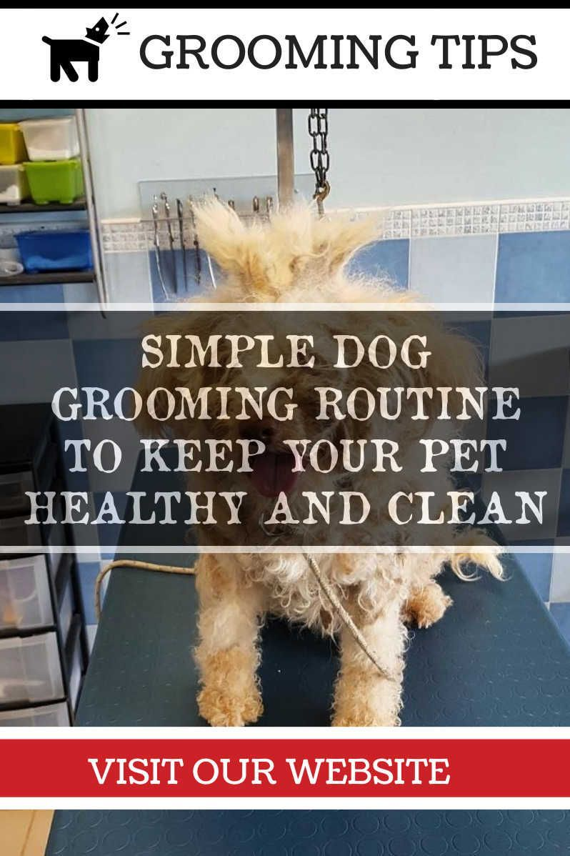 Grooming Your Dog At Home Dog grooming tips, Dog