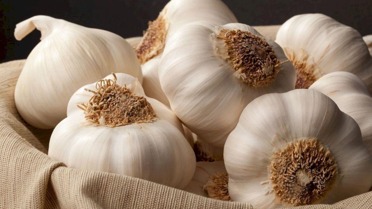 أين يتواجد الزنك بكثرة Garlic Garlic Health Benefits Herbs For Health
