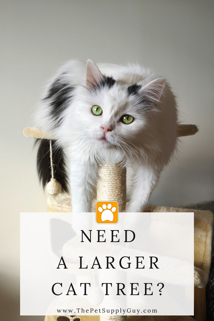 Cat Trees For Large Cats In 2020 Cool Cat Trees Cats Large Cats
