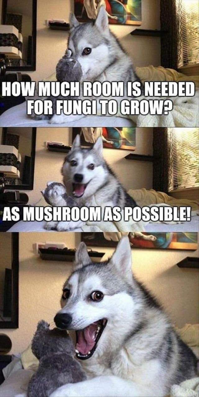 Best Funny Puns Funny Animal Picdump of The Day 136 (24 Photos) - humorside funny-animal-picdump-of-the-day-136-06 3
