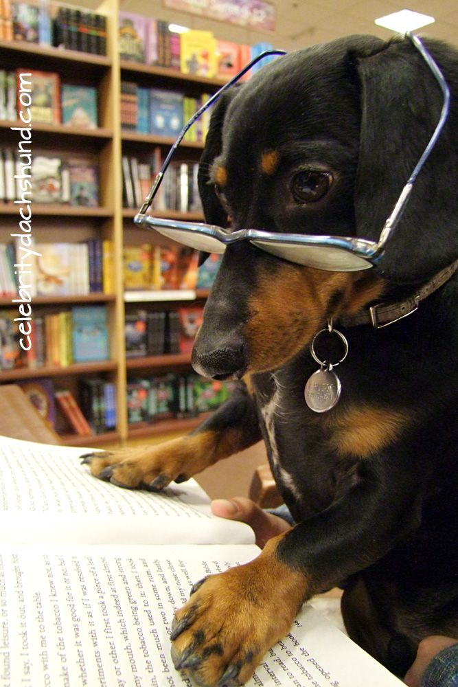 My Trip To The Book Store With Images Crusoe The Celebrity