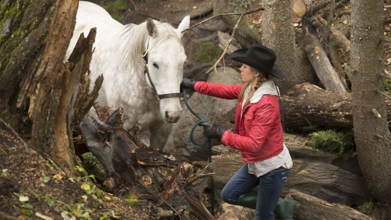 1000 images about HEARTLAND on Pinterest Ty and amy Amber. 1000 images about HEARTLAND on Pinterest Ty and amy Amber marshall and Badger