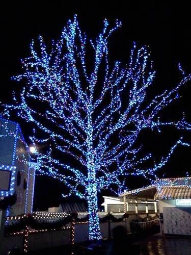 Tree Wred In Blue And White Lights