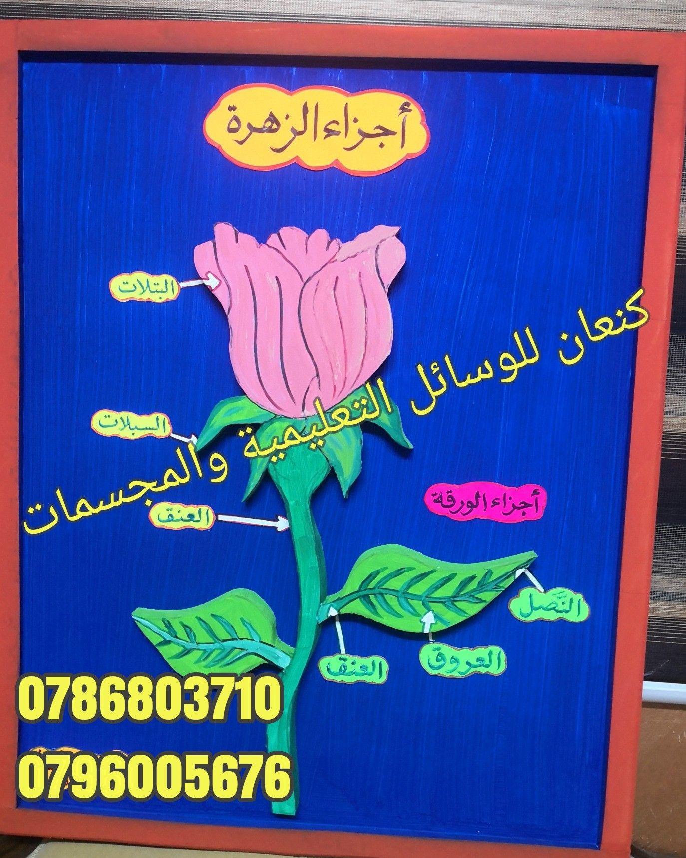 اجزاء الزهرة Preschool Colors Preschool School