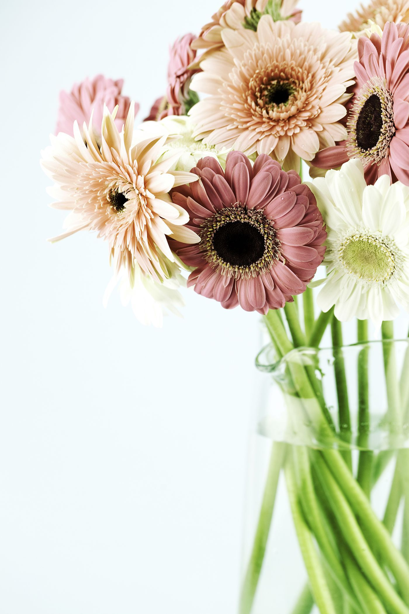 The meaning behind 12 popular valentines day flowers gerbera gerbera daisieswomansday izmirmasajfo