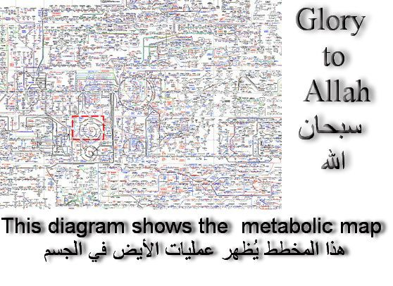 Complete metabolic map