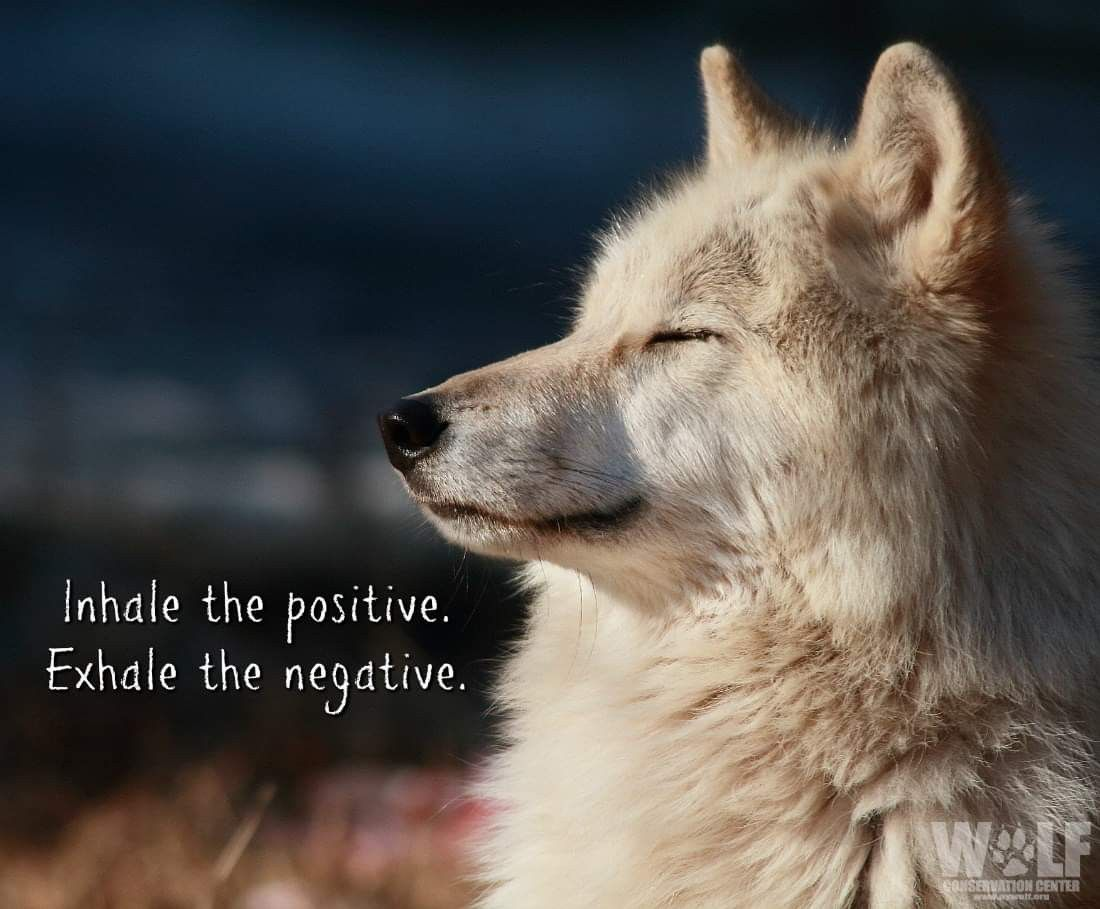 Follow directions | Wolves | Wolf quotes, Lone wolf quotes