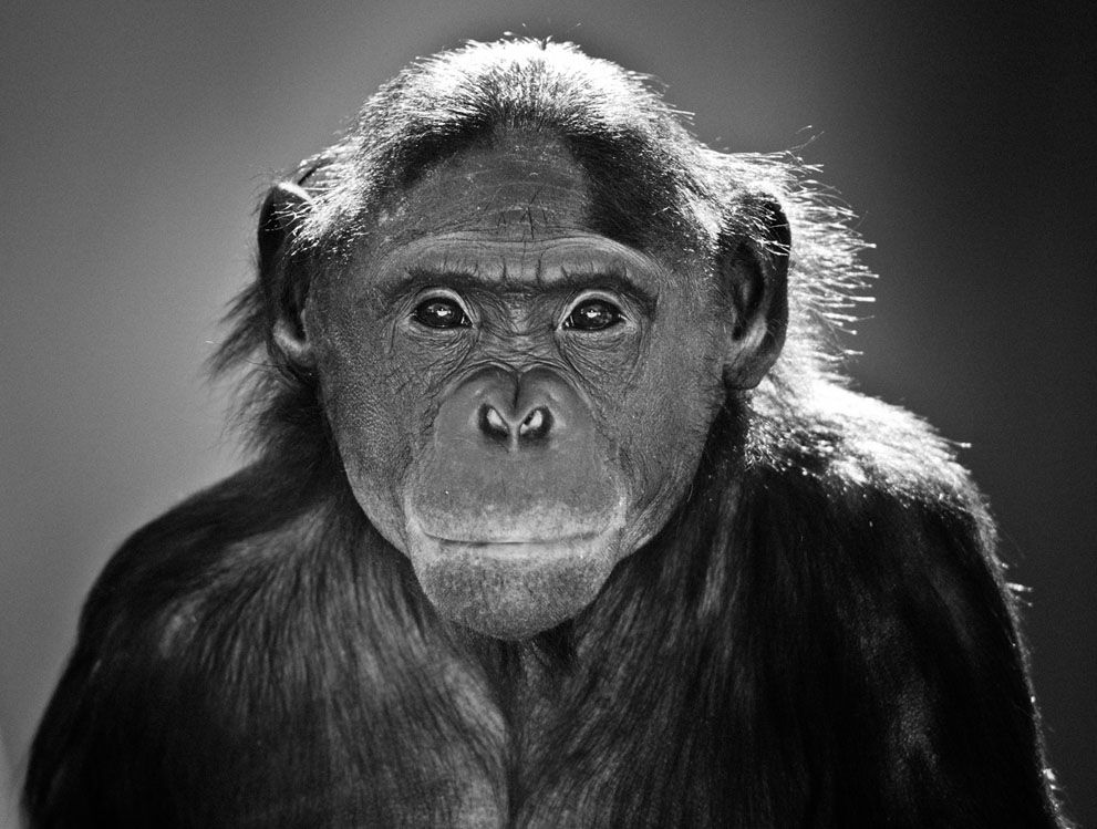 monkeyyy