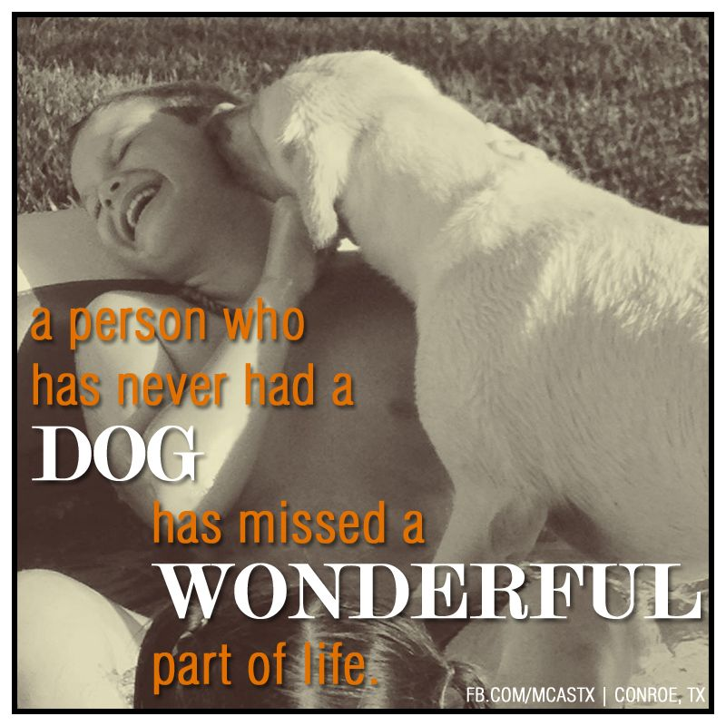 Agreed! Animal shelter, Veterinary services, Foster dog