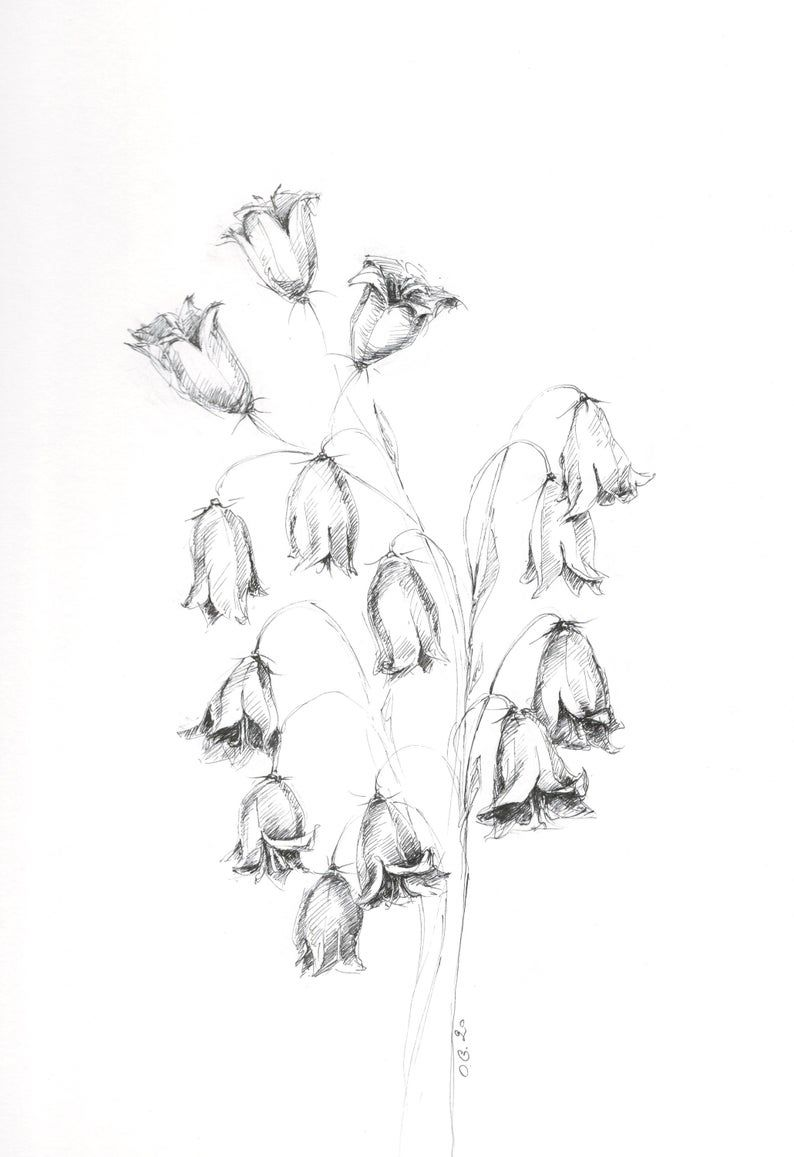 Flowers of the filed, bluebell flowers, flower original