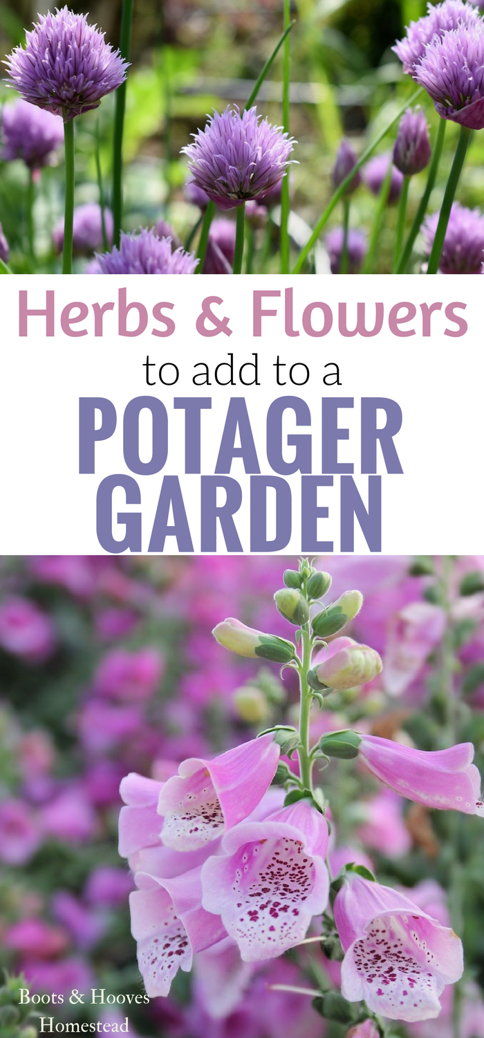 Some of the best ideas for Herbs  Flowers to add to your Potager Garden Design