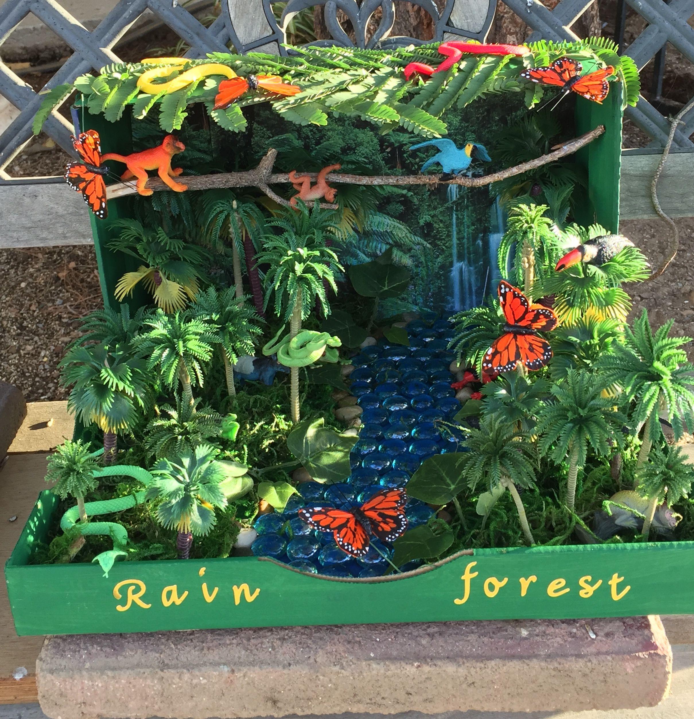 First Grade Rainforest Habitat Project Most Items Were