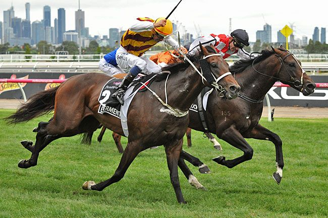 Australian Bloodstock S Red Cardinal Bred In Ireland But Trained In Germany Shipped To The United States And Came Up Big W Horse Racing Gold Cup Red Cardinal
