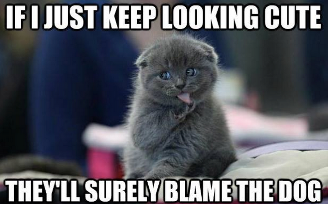 Pinterest Hilarious: Best 25+ Cute Cat Memes Ideas On Pinterest