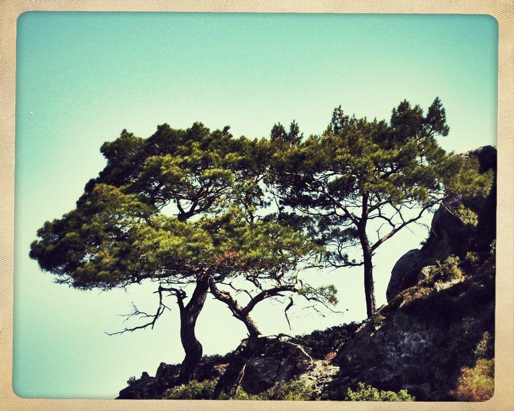 Trees by SelimGuney.deviantart.com  #Tree