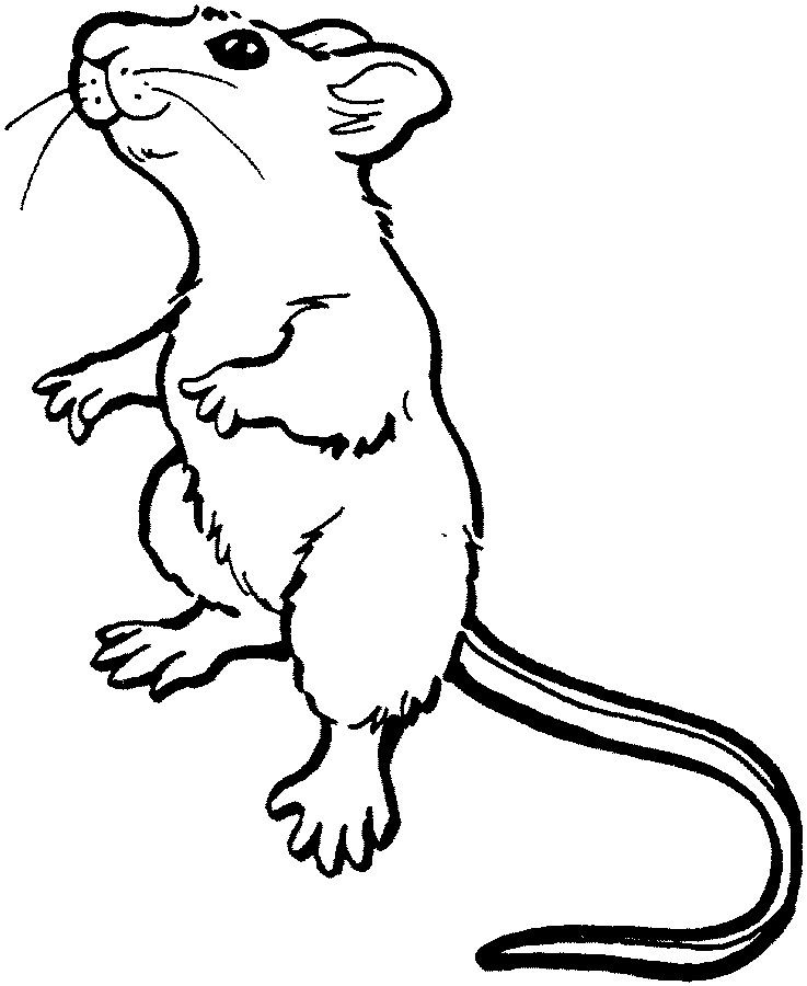 Land Animals To Color Mouse Illustration Mouse Sketch Mouse Drawing