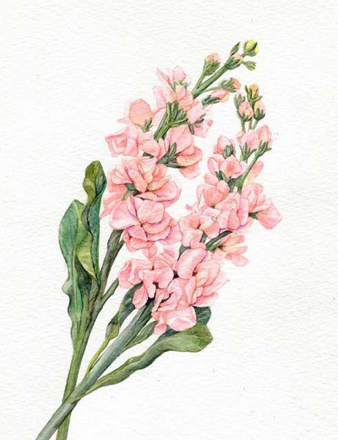 Stock flowers on behance flowers pinterest stock flower stock flowers on behance mightylinksfo Gallery