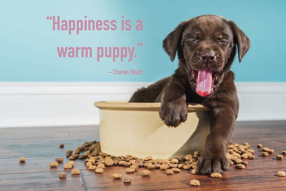 Follow Us To Get Your Daily Puppy Quote Fill Quotes
