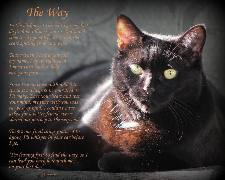 Black Cat The Way by Sue Long Cats, Rainbow bridge cat