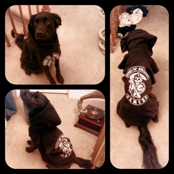 My Sons of anarchy Bentley