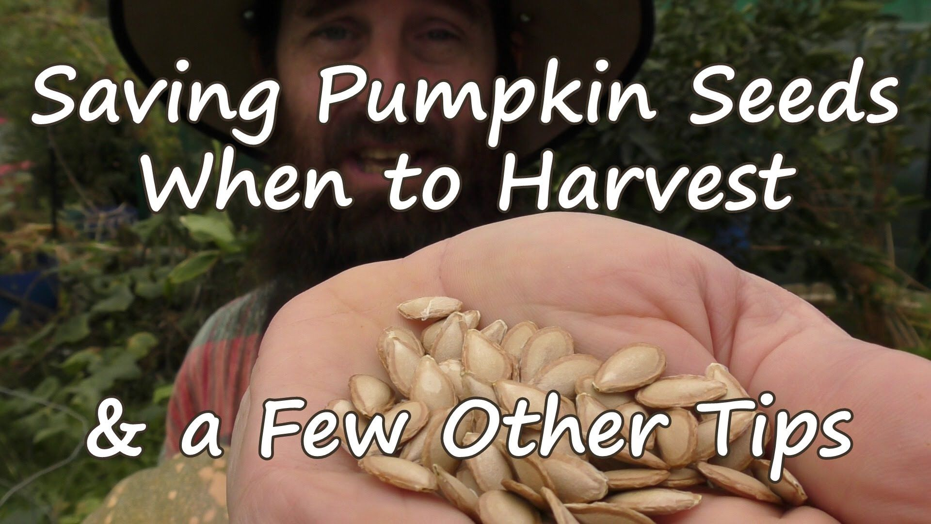 How to Save Pumpkin Seeds, When to Harvest & a Few Other Tips.