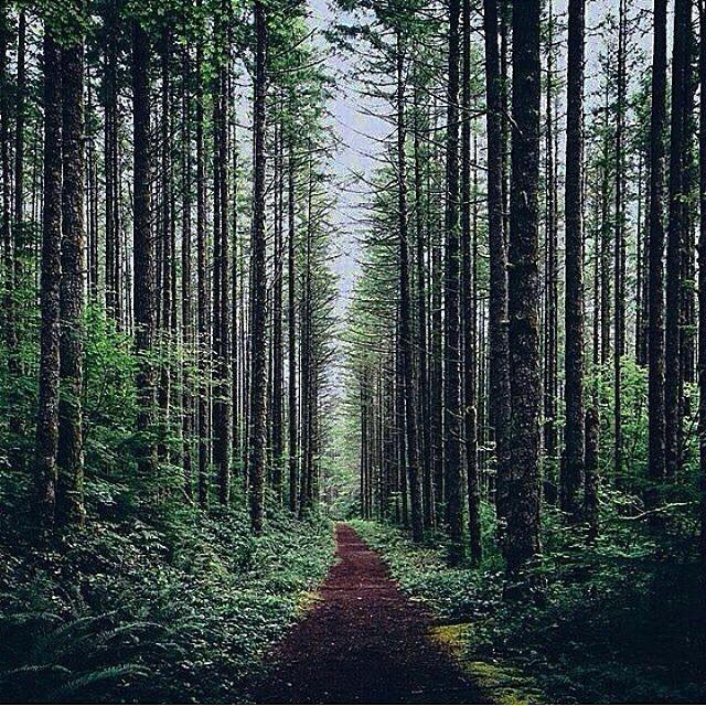 Jogja On Instagram Jogjainfo Photo By Ridwan Aws Location Hutan Pinus Kulonprogo Yogyakarta Terimakasih Atas Partisipa Yogyakarta Pemandangan Indonesia
