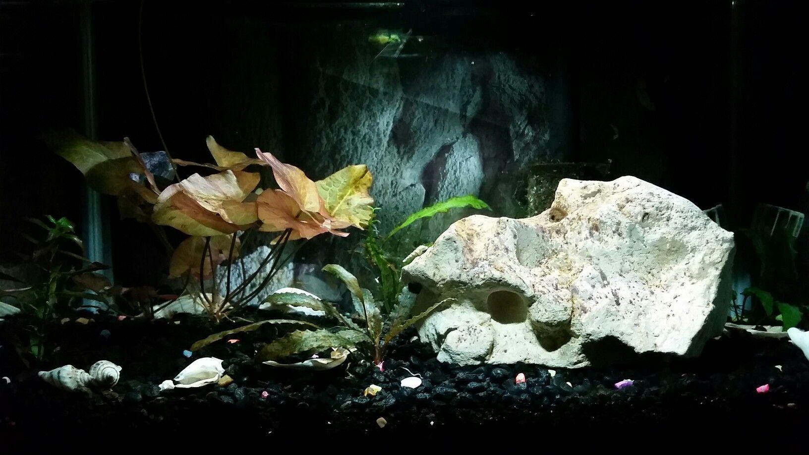 gallons aquascapes pinterest