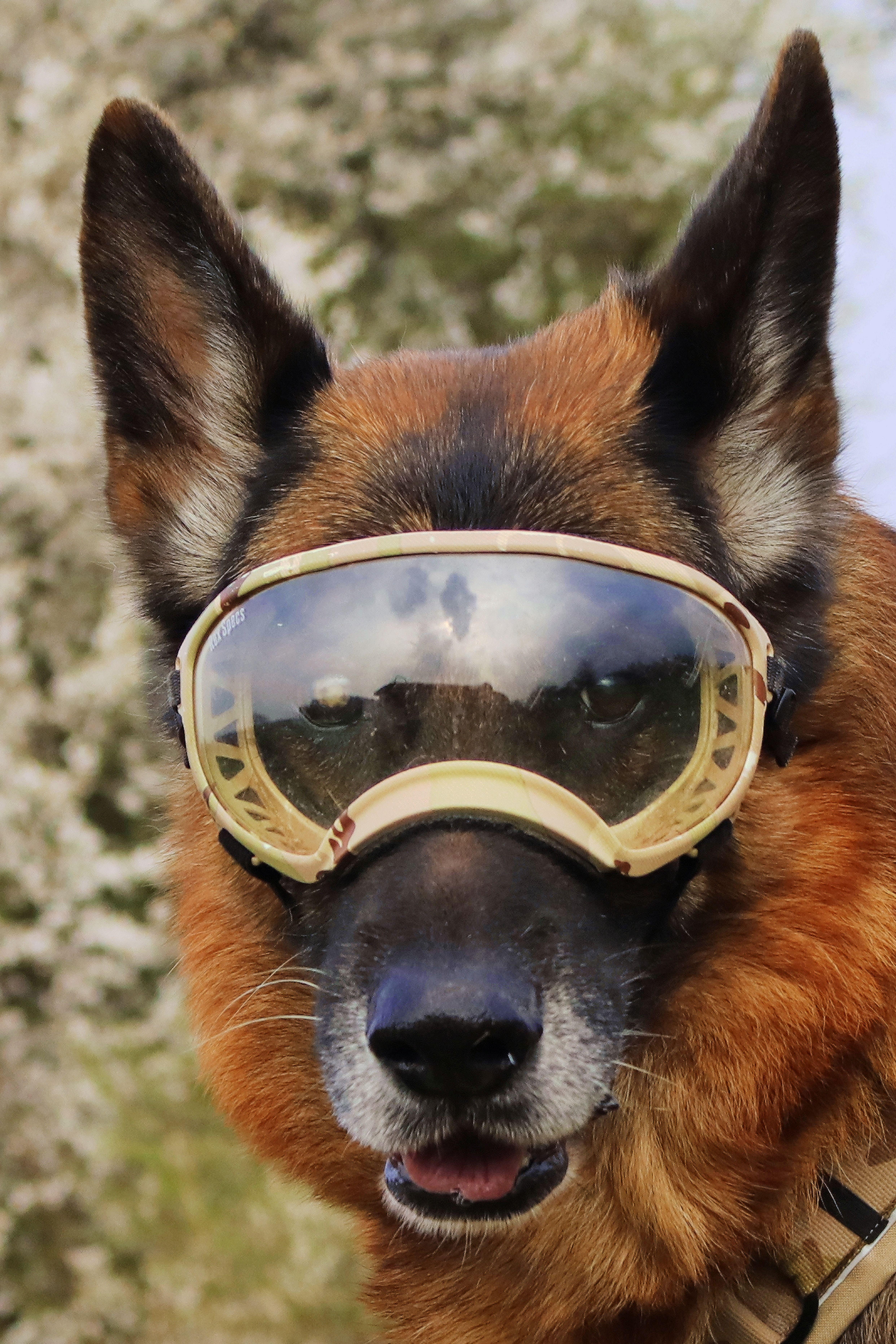 Carat Benutzt Die Rex Specs Hundebrille Bei Jeder Gassirunde
