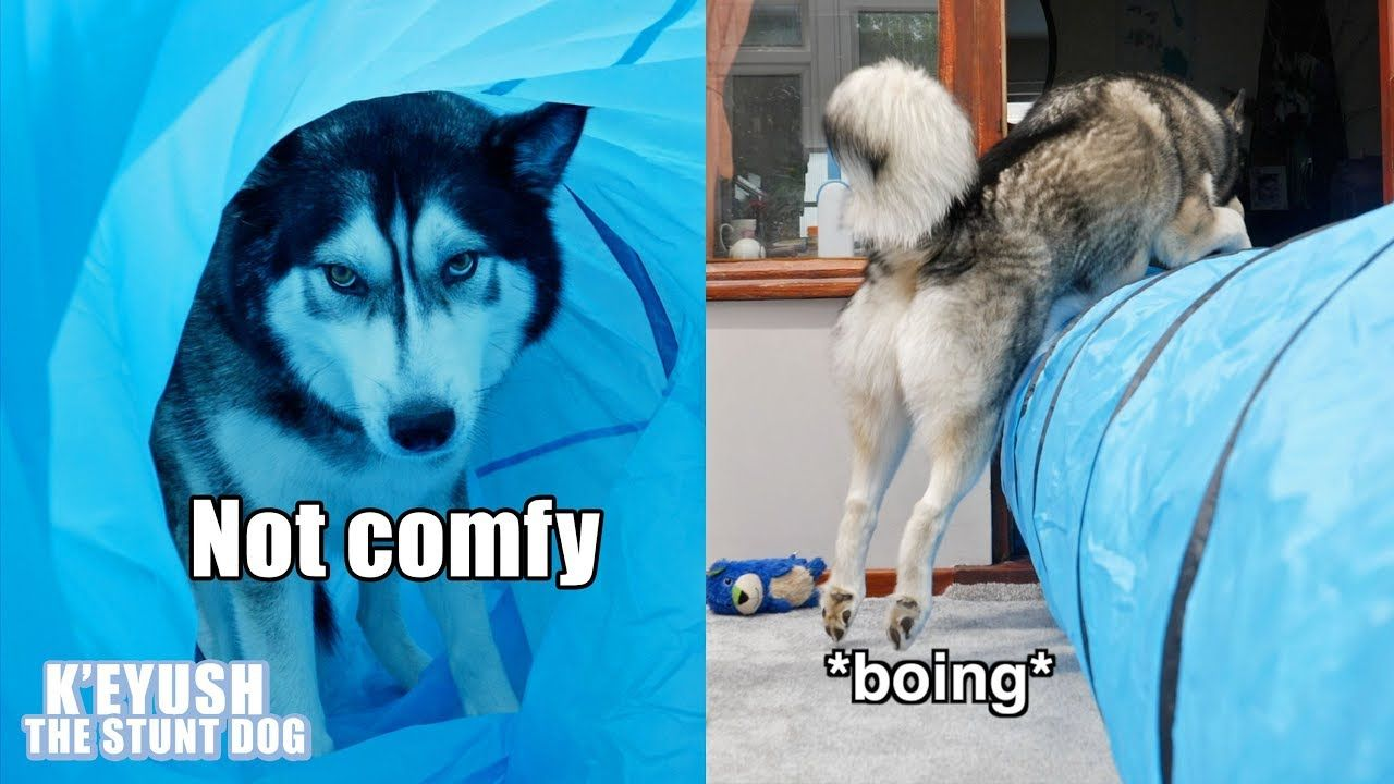 My Dog Uses A Tunnel In All The Wrong Ways Exercise Fail