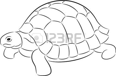 Outline Shell Illustration Of A Tortoise Contour Isolated