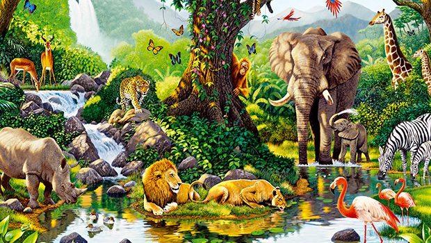 Biodiversidad Busqueda De Google Nicho Ecologico Animales De La Selva Animales