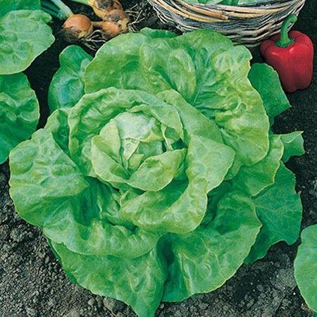 semer des salades d 39 hiver potager d 39 hiver winter veggie garden vegetable garden garden et. Black Bedroom Furniture Sets. Home Design Ideas