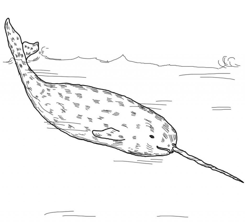 Narwhal Coloring Pages Coloring pages for kids, Coloring