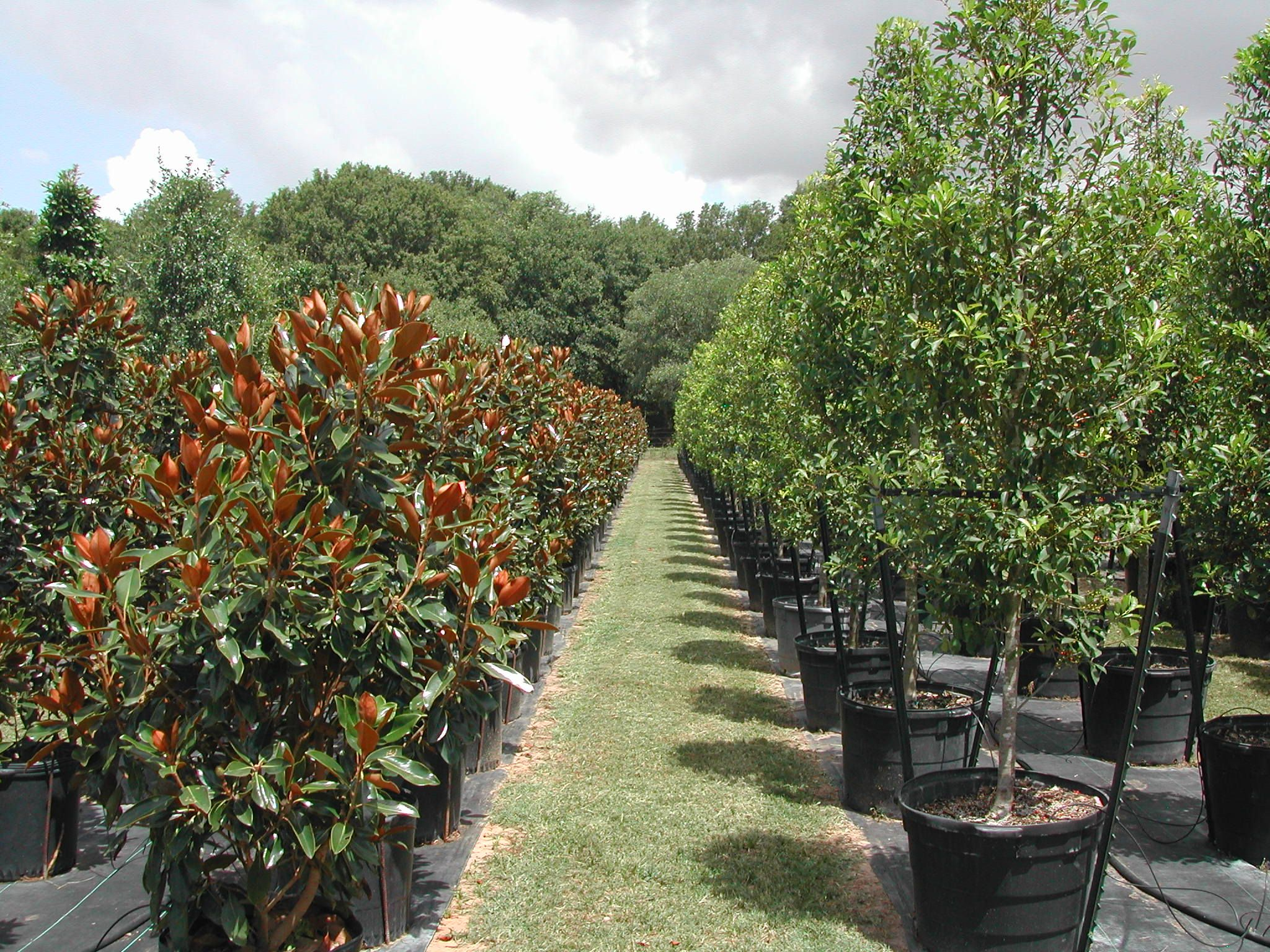 Tree Display In Nursery Whole Nurseryplant
