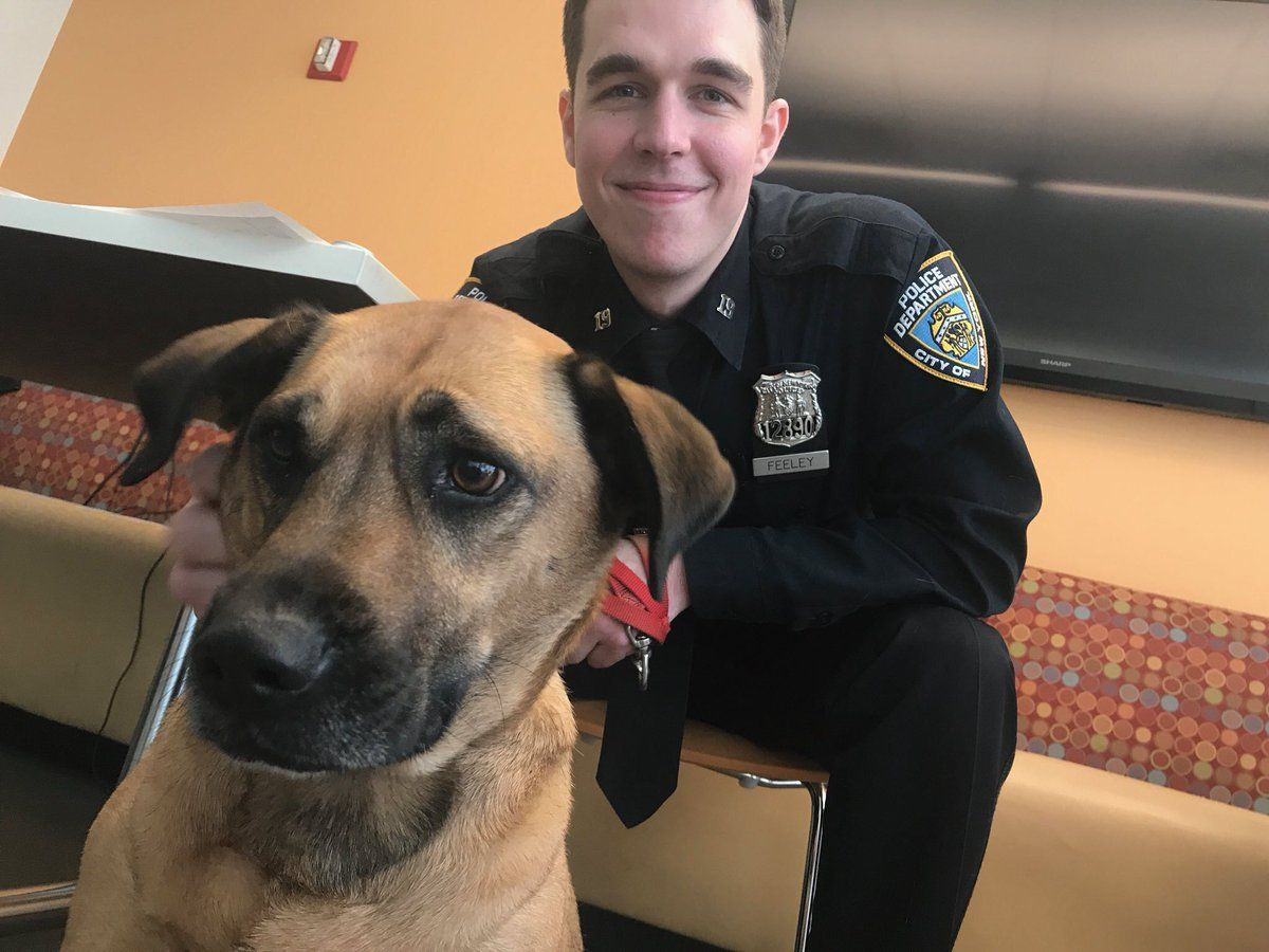 On NationalRescueDogDay we thank our NYPDPaws unit that