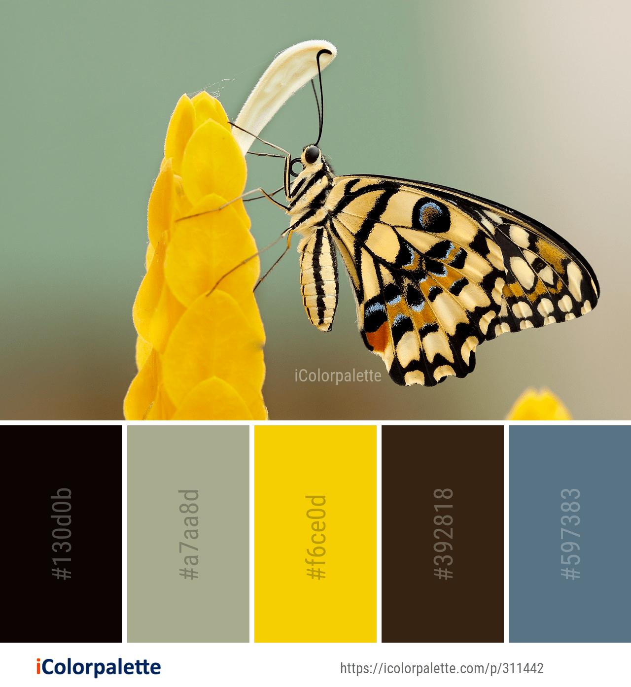 Color Palette ideas #icolorpalette #colors #inspiration #graphics #design #inspiration #beautiful #colorpalette #palettes #idea #color #colorful #colorscheme #colorinspiration #colorcombinations #colorcombos