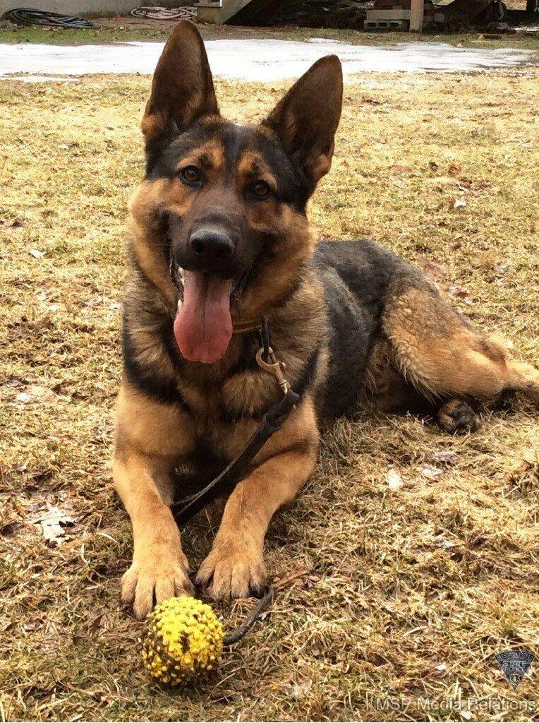 17 Dog Heroes of the Massachusetts State Police Dog hero