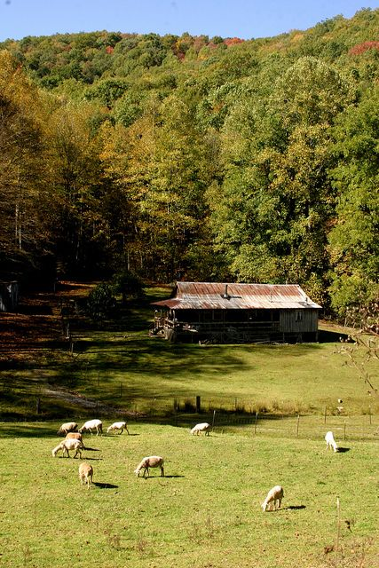 The Thousand Acre Woods Country Landscaping Farm Life Acre