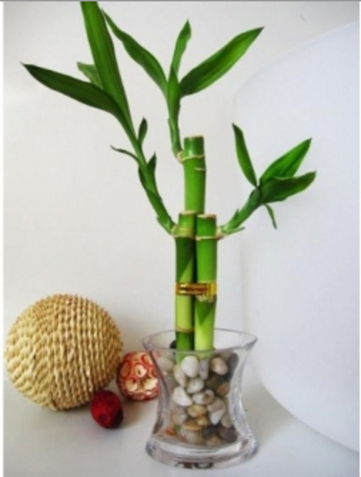 office feng shui plants. How To Use Feng Shui In Your Workspace - The Muse: Believe It Or Not Office Plants O
