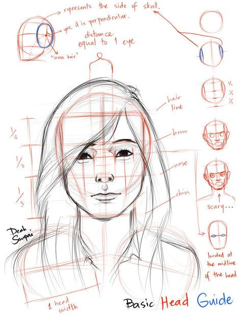 Facial proportions reference guide drawing references and resources scoop it