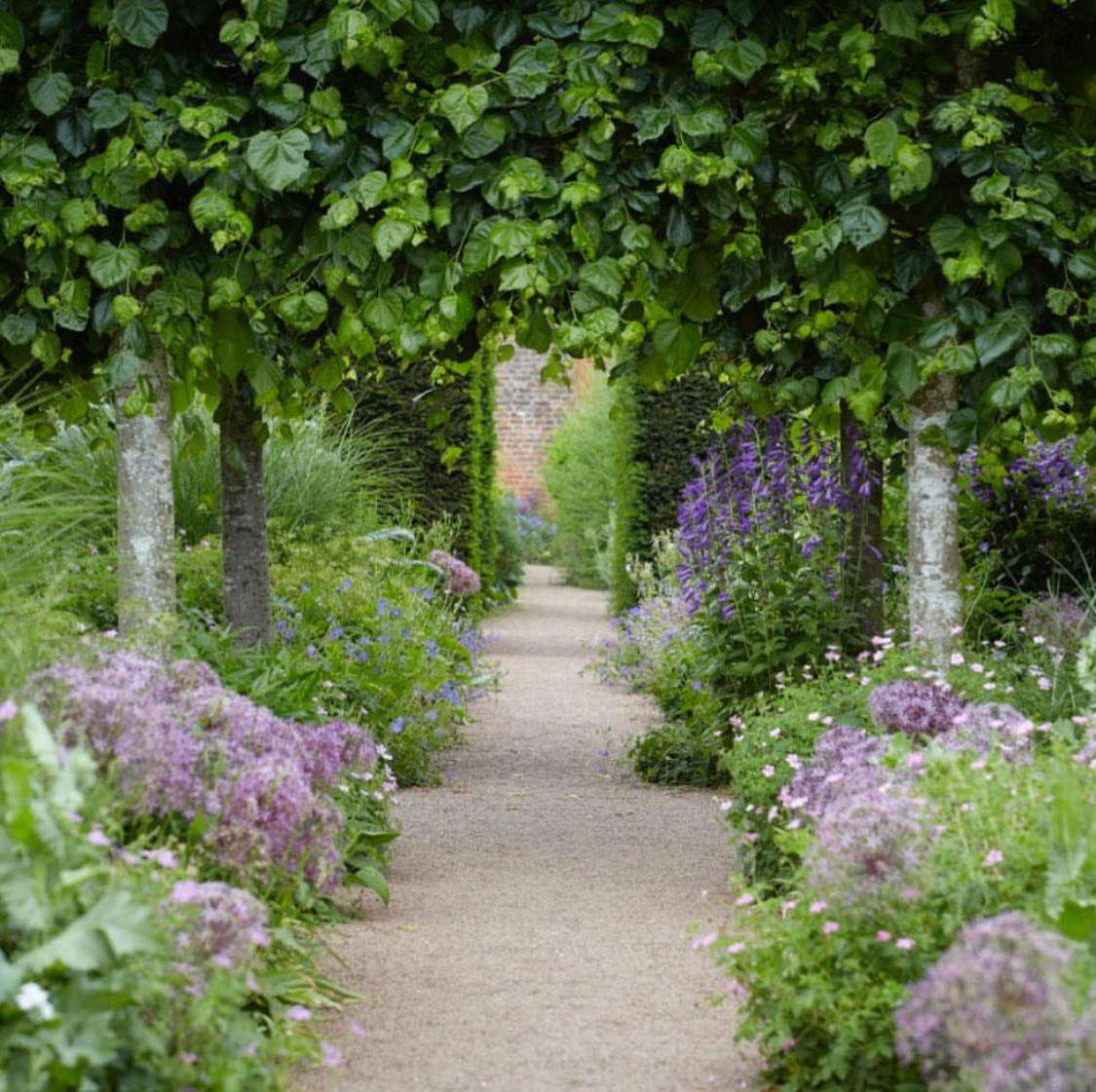 Small Trees For Borders: Douible Borders & Pleached Trees