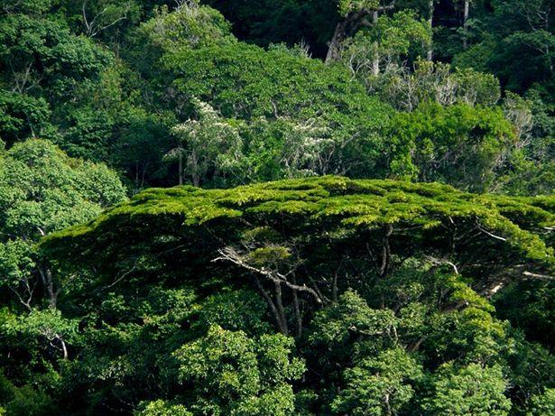 La Foret Amazonienne En Guyane