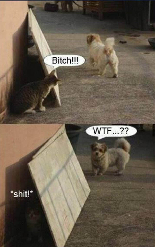 Funny cat vs dog Funny cat pictures, Dog jokes, Funny cats